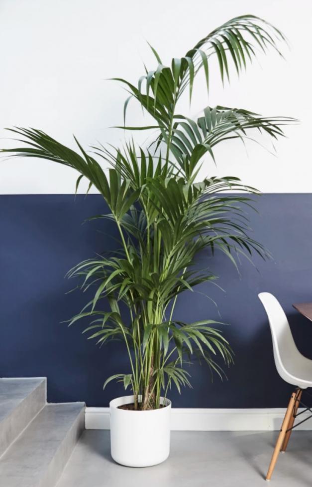 indoor plant discount code
